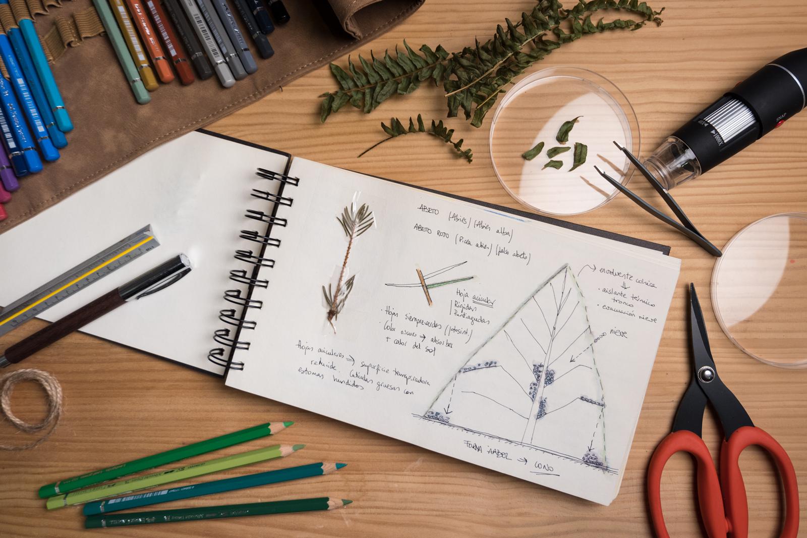 Cuaderno Abeto